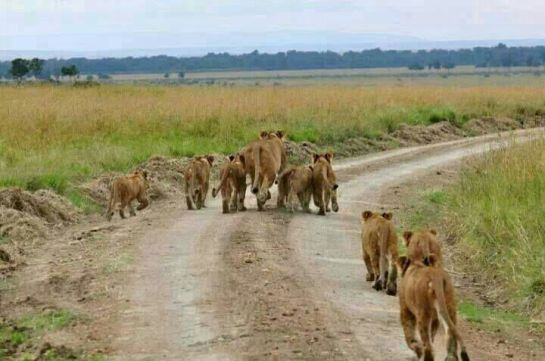Lets go for a walk family - amazing Ngorongoro.